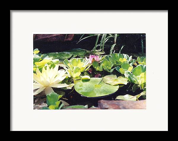 Waterlillies Framed Print featuring the photograph Morning Pond by Laura Johnson