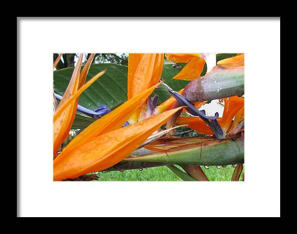 Nature Framed Print featuring the photograph Morning Rain by Gloria Byler