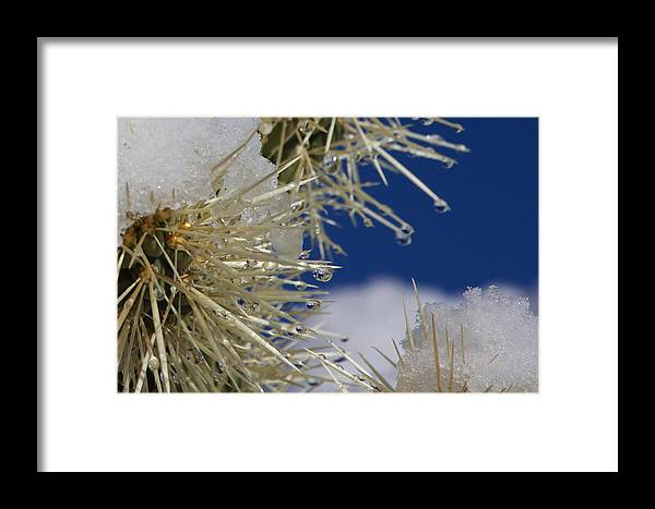 Framed Print featuring the photograph Morning Snow On Cactus Spines #1 by Eric Rosenwald