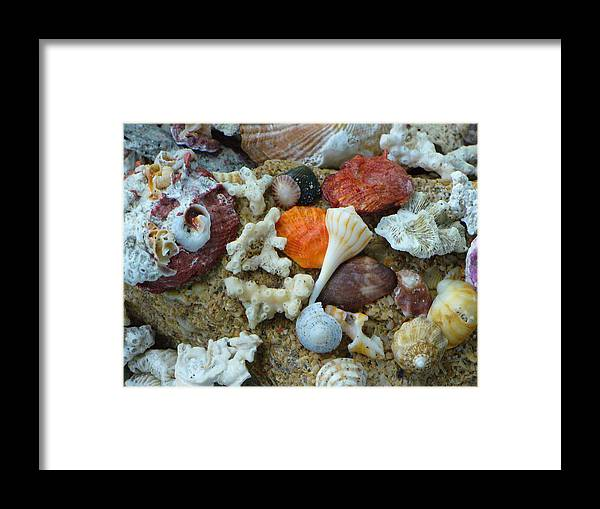 Shells Framed Print featuring the photograph Morning Treasures by Peggy King
