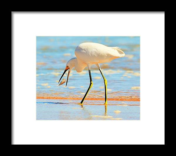 Bird Framed Print featuring the photograph Morning Walk 2 by Maricel Barber