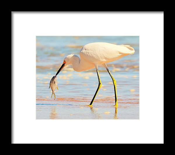 Bird Framed Print featuring the photograph Morning Walk 1 by Maricel Barber
