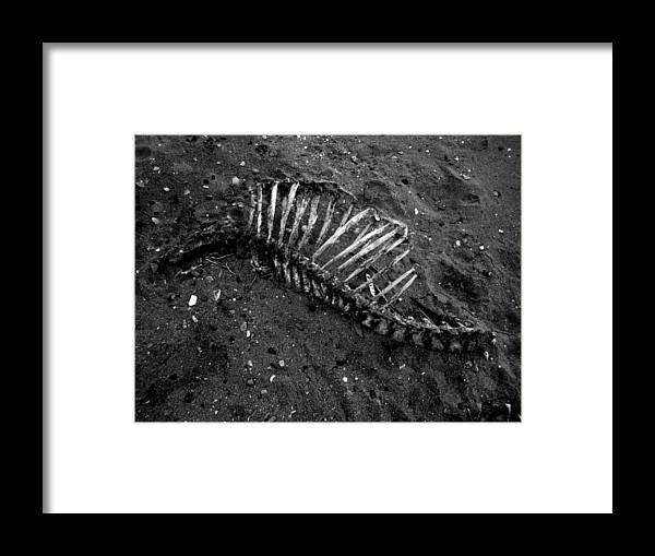 Bones Framed Print featuring the photograph Mortality Reminder by Wayne Higgs