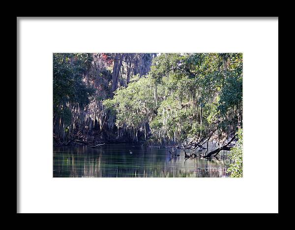 Trees Framed Print featuring the photograph Moss At Blue Springs by Deborah Benoit