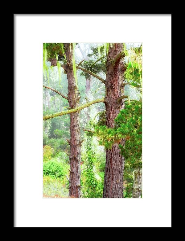 Trees Framed Print featuring the photograph Moss Draped Trees in the Fog by Kirsten Giving