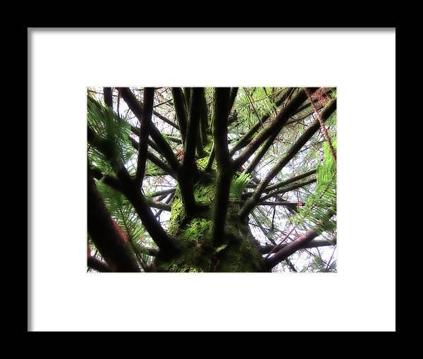 Pine Framed Print featuring the photograph Moss Tree by Douglas Barnard