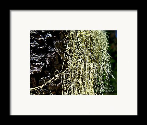 Tree Framed Print featuring the photograph Mossy Tree by PJ Cloud