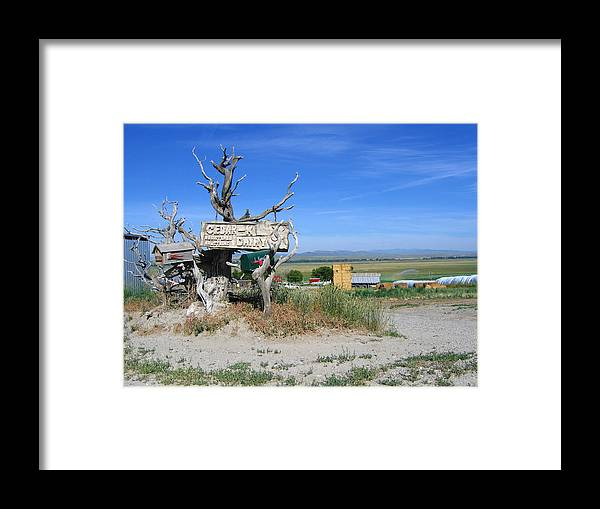 Mail Framed Print featuring the photograph Most Unusual Mailbox by Diane Wallace