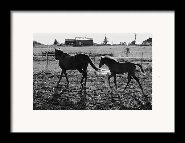 Black Framed Print featuring the photograph Mother And Baby by J D Banks