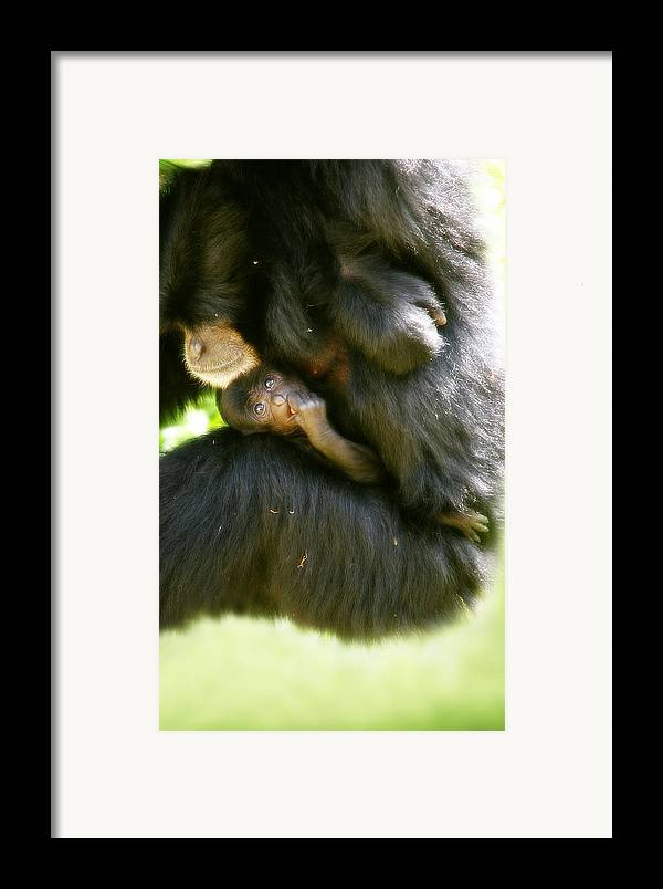 Monkey Framed Print featuring the photograph Mother And Baby Monkey by Lesley Smitheringale