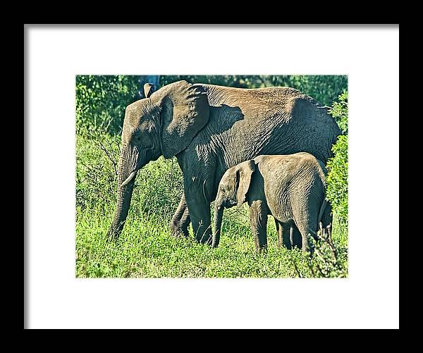 Elephant Framed Print featuring the photograph Mother And Daughter by Andrew Oliver