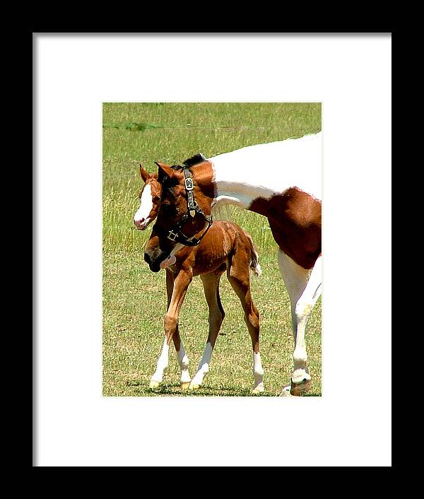 Horse Framed Print featuring the photograph Mother And Newborn by Donna Thomas