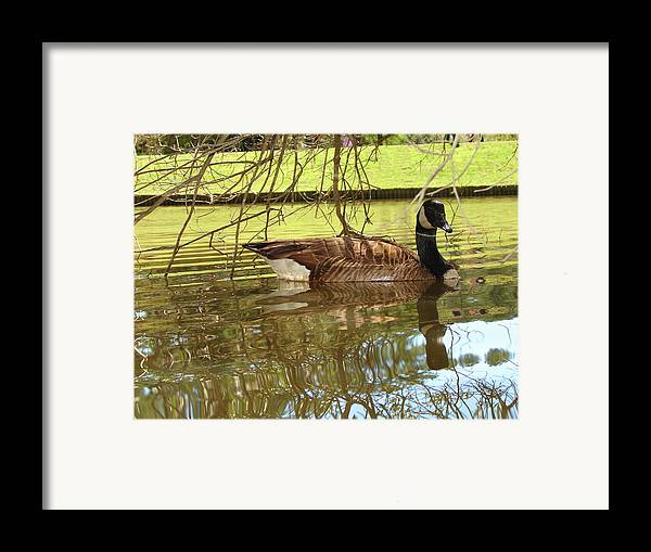 Goose Framed Print featuring the photograph Mother Goose by Laura Brightwood
