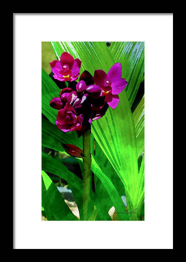 Natures Gift Framed Print featuring the digital art Mother Nature's Gift by James Temple