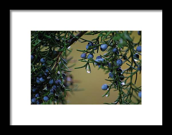 Trees Framed Print featuring the photograph Mother Nature's Tears by Trudi Southerland