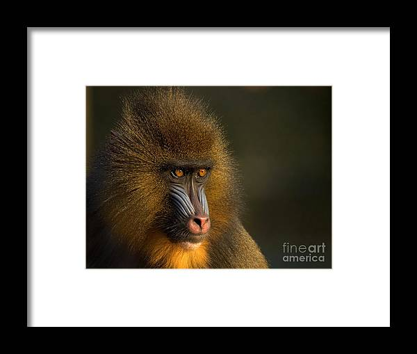 Wildlife Framed Print featuring the photograph Mother's Finest by Jacky Gerritsen