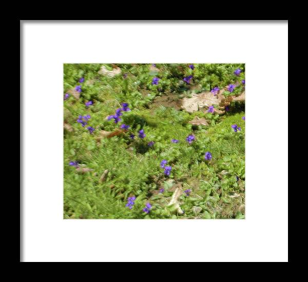 Violets Framed Print featuring the photograph Mother's Violets by Bonnie Lee