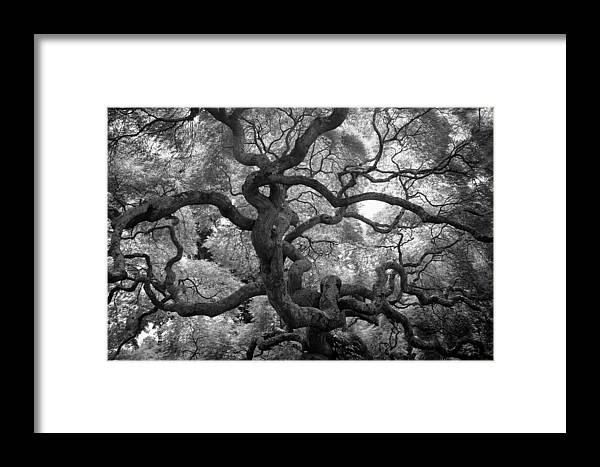 Tree Framed Print featuring the photograph Motivations by Mitch Cat