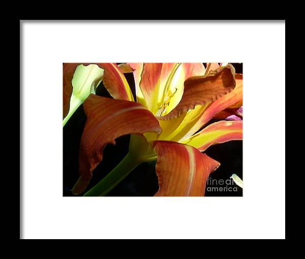 Single Flower Framed Print featuring the photograph Mountain Day Lily by Beebe Barksdale-Bruner