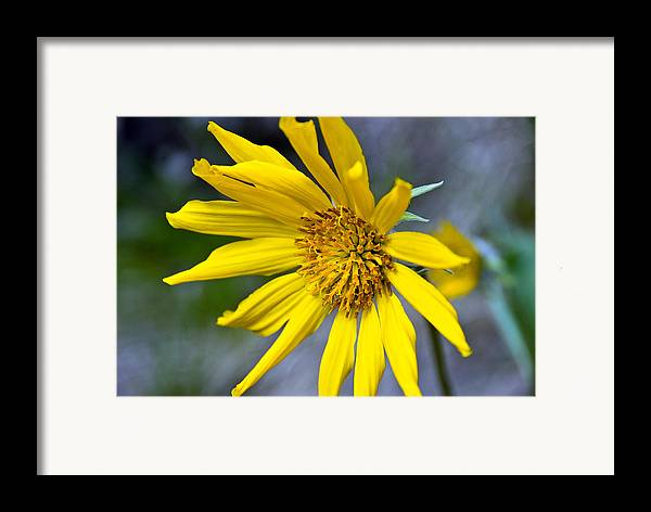 Framed Print featuring the photograph Mountain Flower by JK Photography