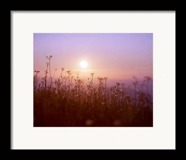 Mountain Framed Print featuring the photograph Mountain Flower Rising by Benjamin Garvey