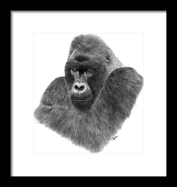 Gorilla Framed Print featuring the drawing Mountain Gorilla by Rosanna Maria