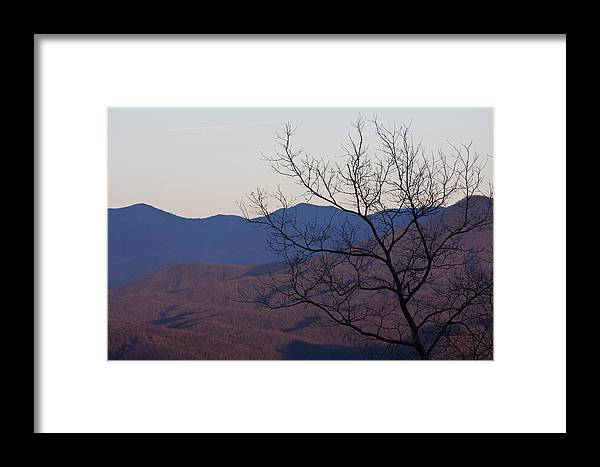 Tree Mountain Mountains Sun Sunset Sky Winter Smoky Park National Framed Print featuring the photograph Mountain Tree by Andrei Shliakhau