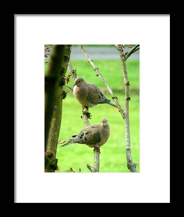 Doves Framed Print featuring the photograph Mourning Doves by Lisa Rose Musselwhite