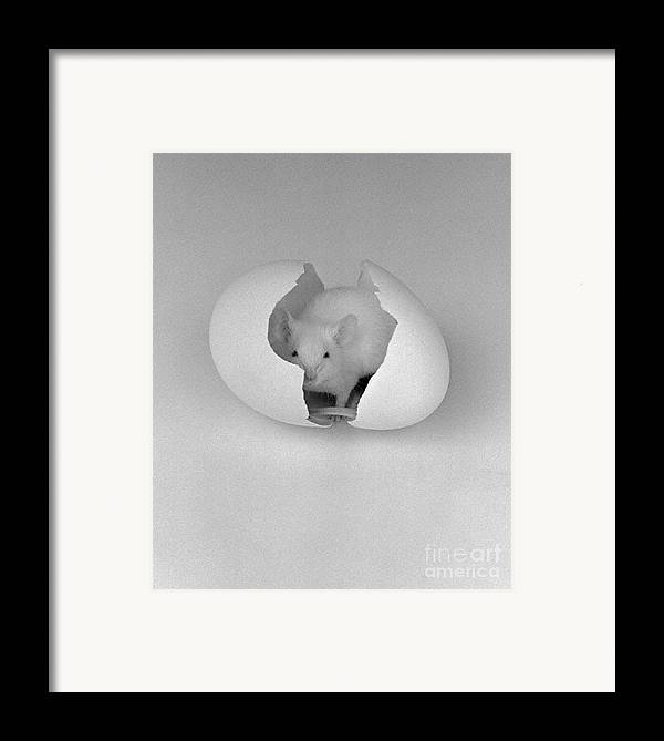 Mouse Framed Print featuring the photograph Mouse House by Michael Swanson
