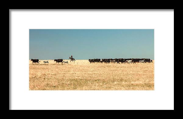 Moving The Herd Framed Print By Todd Klassy