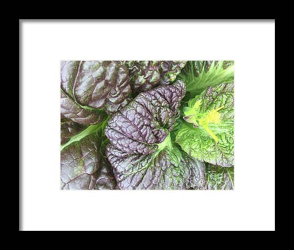 Leaves Framed Print featuring the photograph Mr. Cabbage's Little Secret by Kiki Pinkepank