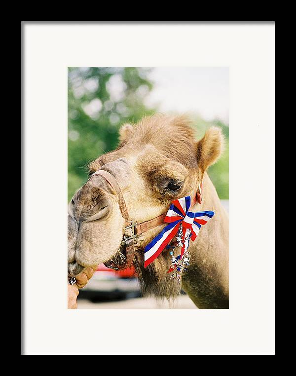 Camel Framed Print featuring the photograph Mr. Camel by Cheryl Vatcher-Martin