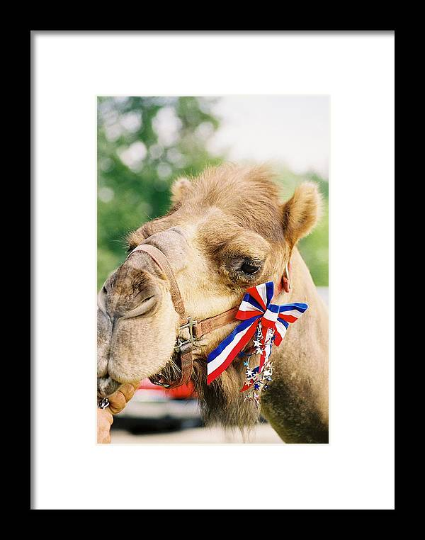 Camel Framed Print featuring the photograph Mr. Camel by Cheryl Martin