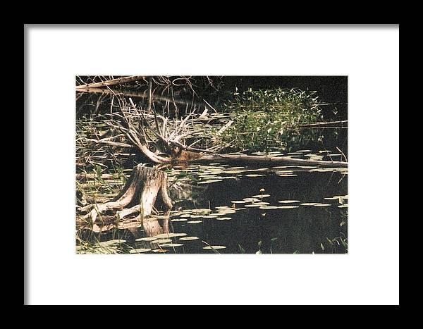 Lake Framed Print featuring the photograph Mud Lake Landscape - Photograph by Jackie Mueller-Jones
