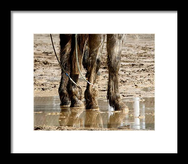 Western Framed Print featuring the photograph Muddy Reflections.. by Carol Miller