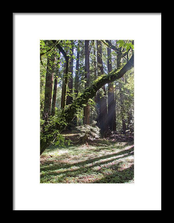 California Framed Print featuring the photograph Muir Wood by Marcus L Wise