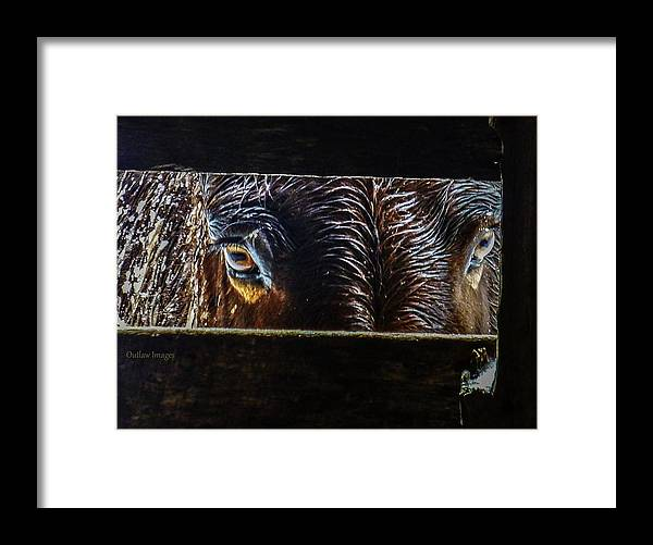 Mule Framed Print featuring the photograph Mule Eyes by Holly Dwyer