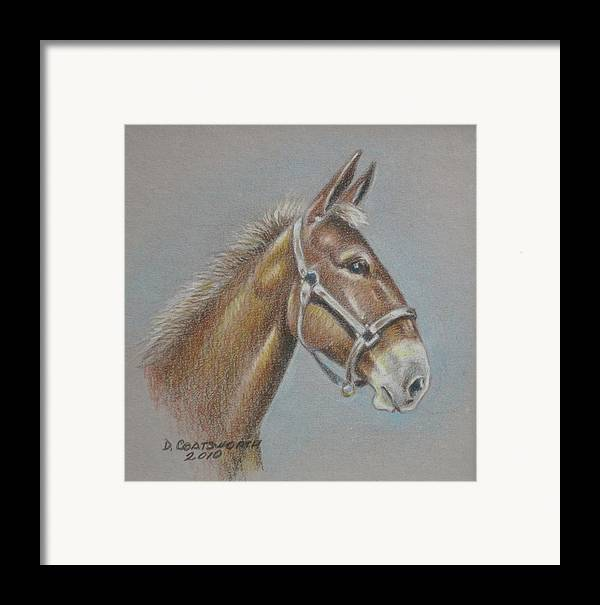 Framed Print featuring the painting Mule Head by Dorothy Coatsworth