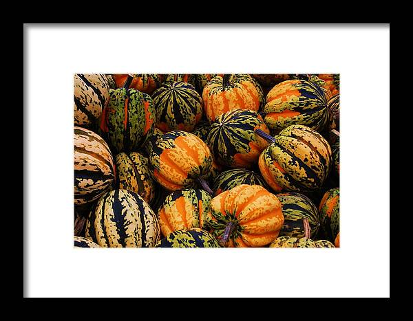 Squash Framed Print featuring the photograph Multi Colored Acorns by Jame Hayes