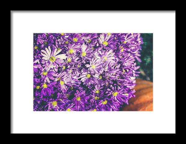 Mums The Word Framed Print featuring the photograph Mums The Word by Christi Kraft
