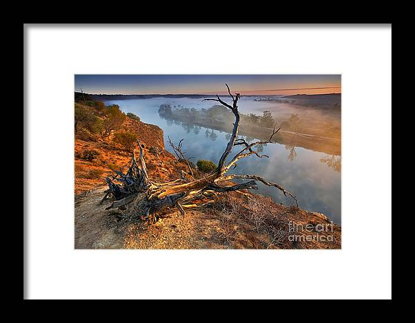 Murray River Dawn Sunrise Mist Misty Fog Foggy Still Serene River Fallen Tree Uprooted Inland Water Early Morning Landscape Landscapes South Australia Australian Framed Print featuring the photograph Murray River Dawn by Bill Robinson