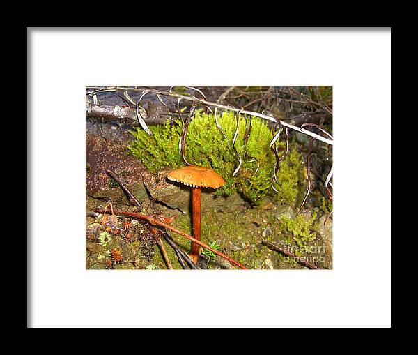 Mushroom Framed Print featuring the photograph Mushroom Microcosm by Jim Thomson