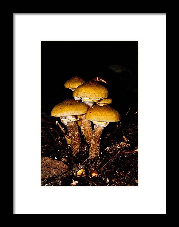 Mushrooms Framed Print featuring the photograph Mushrooms By Night by Douglas Barnett