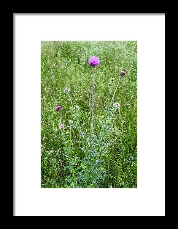 Photograph Framed Print featuring the photograph Musk Thistle In Full Glory by Mandy Elliott