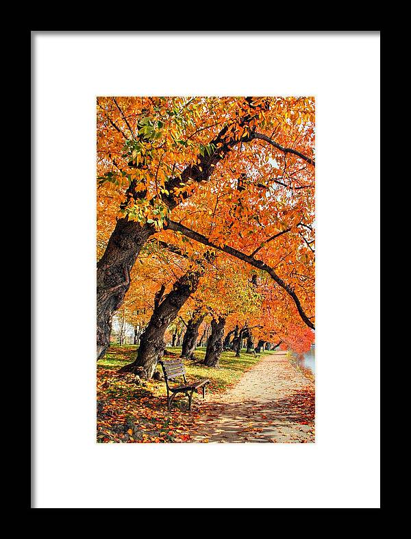 Autumn Framed Print featuring the photograph Mute Appeal by Mitch Cat