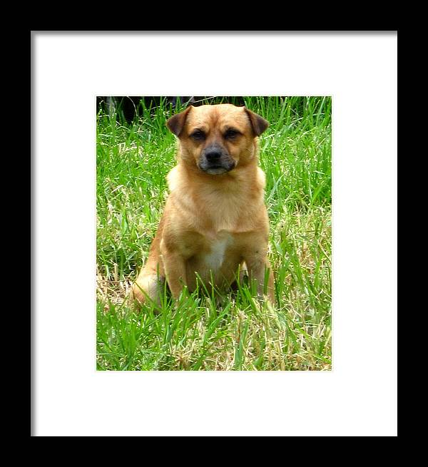 Framed Print featuring the photograph My Dog Milo by Miss McLean