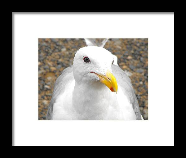Bird Framed Print featuring the photograph My Fry by Marianne Mason