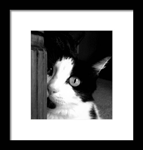 Black And White Framed Print featuring the photograph My Moo by Holly Ethan