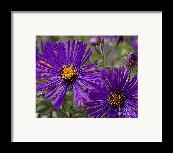 Plant Framed Print featuring the painting My Purple Ways by Debbie May