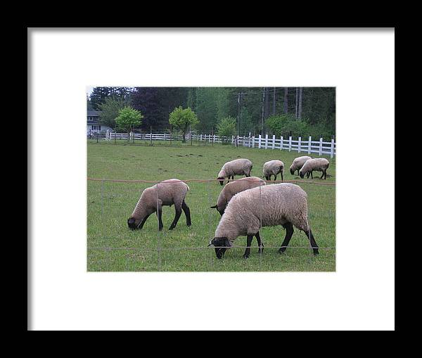 Framed Print featuring the digital art My Sheep Know My Voice by Barb Morton